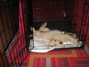 Honey in her Crate