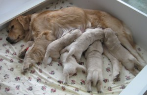 Awwwww! Puppies!