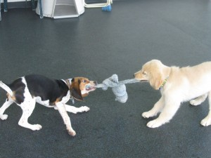 What's a little tug between friends?