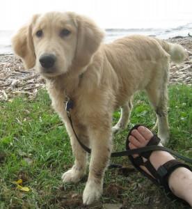 Hmmmm! I want to grab that sandal. But I bet it's kinda heavy.