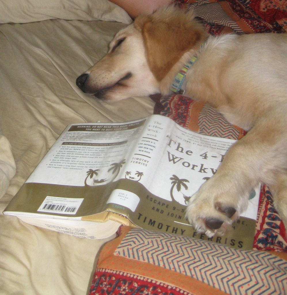Honey likes to read in bed.