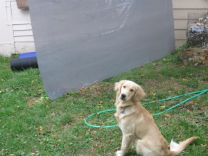 Golden Retriever Puppy Sitting Pretty