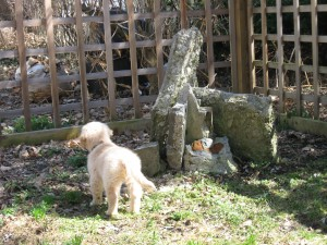 Golden Retriever Puppy at a Fence