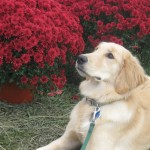 Tue Cute Tuesday – Take Time to Smell the Mums