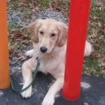 The Puppiness Project – Ask for Help