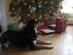 Large Dog and Christmas Tree