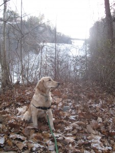 Golden Retriever at Ithaca Falls