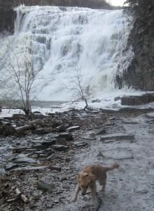 Golden Retriever at Water Fall