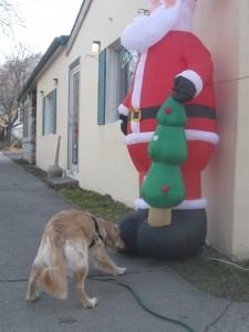 Golden Retriever Sniffs Santa
