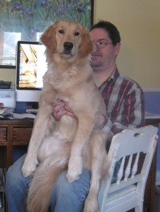 Golden Retriever Dog on Man's Lap