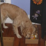 New K9 Nose Work Instructions – Try It Today
