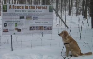 Golden Retriever and a sign