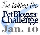 Pet Blogger Challenge - January 10, 2011