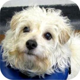 Adopt Daisy at the Tompkins County SPCA