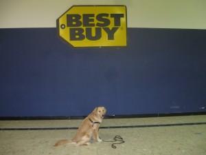 Golden Retriever at the mall