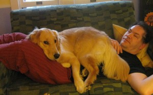 Golden Retriever lying on man.