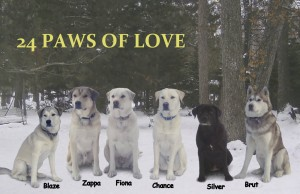 24 Paws of Love Header