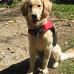 The Puppiness Project – Enjoy Your Own Backyard