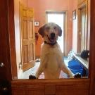 Boomer at Cayuga Dog Rescue