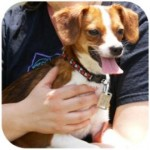 Wordless Wednesday – Adoptable Georgette Waiting for Upstate NY Home