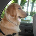 Why I'm Going to BlogPaws
