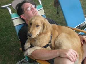 Golden Retriever sitting on lap of man on lawn chair.