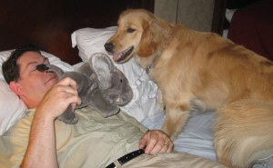Golden Retriever plays bitey face with stuffed toy