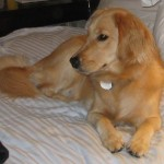 BlogPaws 2011 – Lessons Learned, Day 1