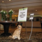 A Newbie's First Impressions of BlogPaws