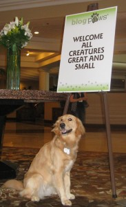 Golden Retriever at BlogPaws