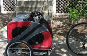 Mixed breed dog in Doggy Ride bicycle cart