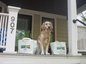 Golden Retriever with BlogPaws swag bags.
