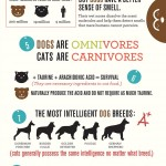 Do You Know the Differences Between Cats & Dogs?