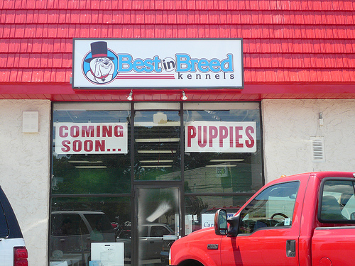 Puppy Mill Outlet?