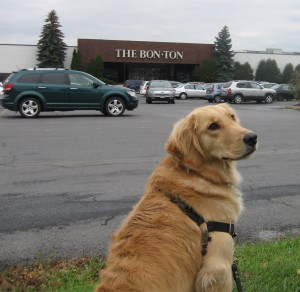 Golden Retriever in front of Bon Ton at the Shops of Ithaca Mall