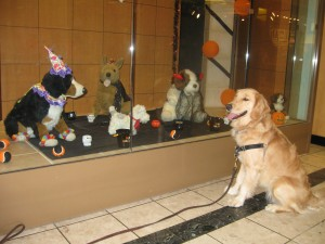 Golden Retriever and Halloween Dogs in store display
