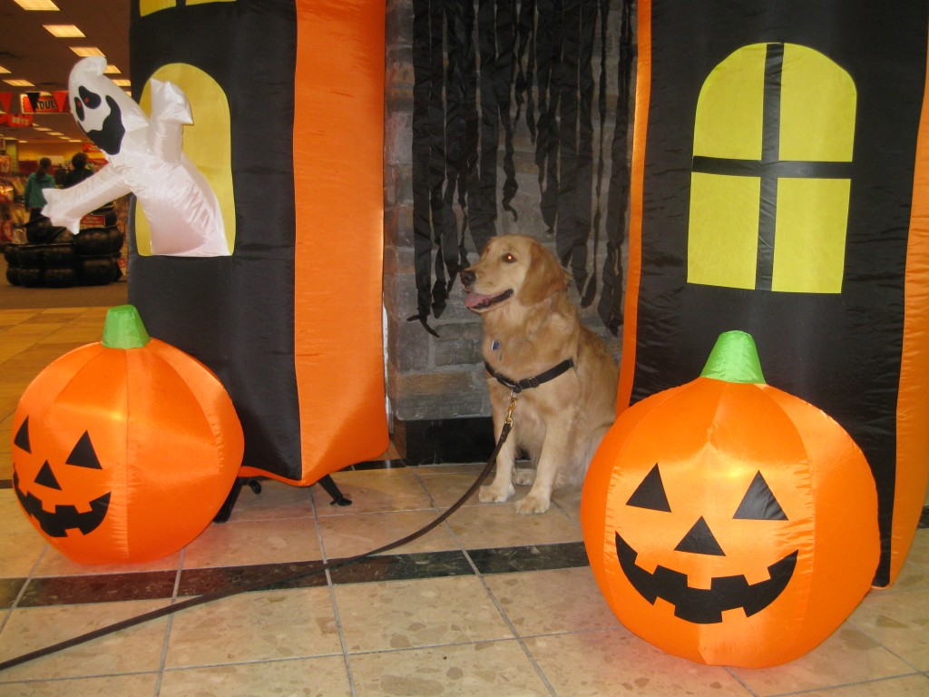 Honey at the Halloween Store at the Shops at Ithaca Mall