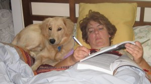 Golden Retriever in bed with woman