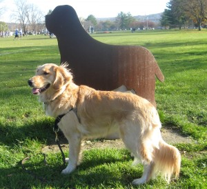 Golden Retriever with metal dog sculpture at Cass Park