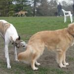 Dog Park Duties – Tue Cute Tuesday