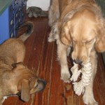 The Puppiness Project – Some Things Aren't Worth Fighting Over