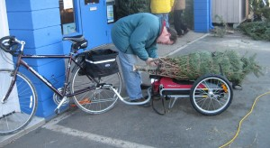 Man attaching baled Christmas tree to bike cart