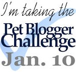 Pet Blogger Super Heroes – Pet Blogger's Challenge 2015