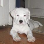 Wordless Wednesday – Meet Buster!