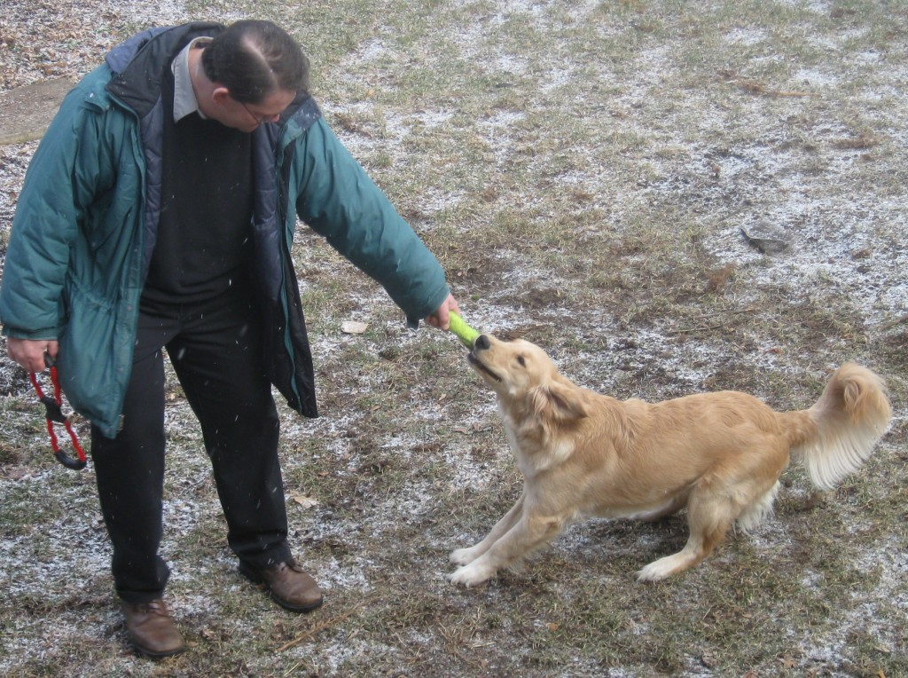 Man playing tug of war with Golden Retriever