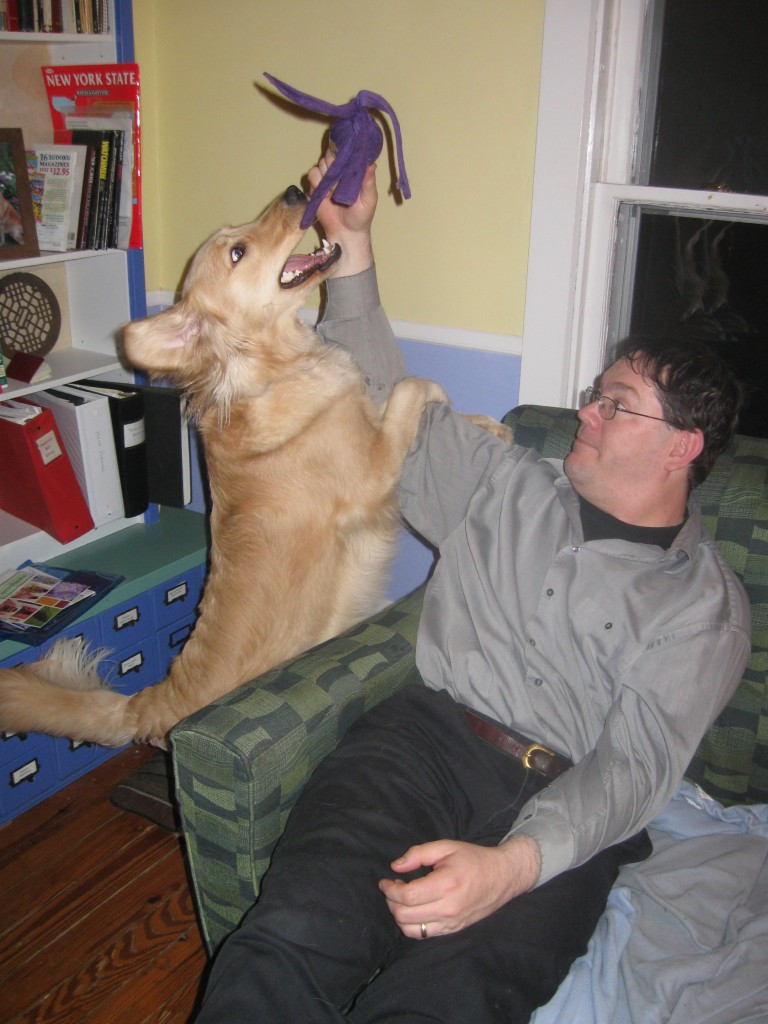 Golden Retriever and Man playing with Kong dog toy