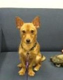 Eddie the terrier mix at the Tompkins County SPCA up for adoption.