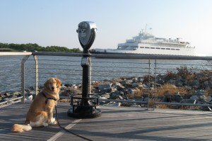 Golden Retriever at the Cape May Ferry Terminal