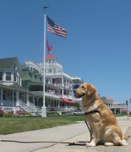 Golden Retriever at Cape May Beach Resort