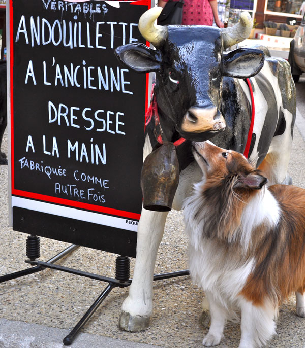 Chula the Shetland Sheepdog nuzzling a cow and sign at a Butcher's display